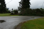 Trees down on 18 Street barely missed a home: Photo, Mona Mattei