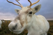REVEALED: The Secret Origin of Santa Claus...and 'flying' reindeer